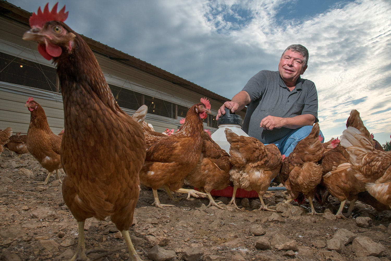 chickens in portrait with farmer Portraits